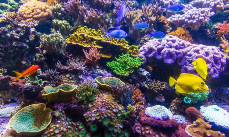 A picture of a vibrant coral reef.